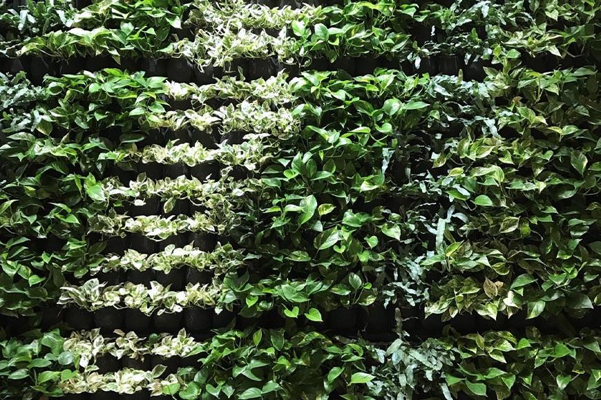Pflugfelder Immobilien: Pflanzenwand